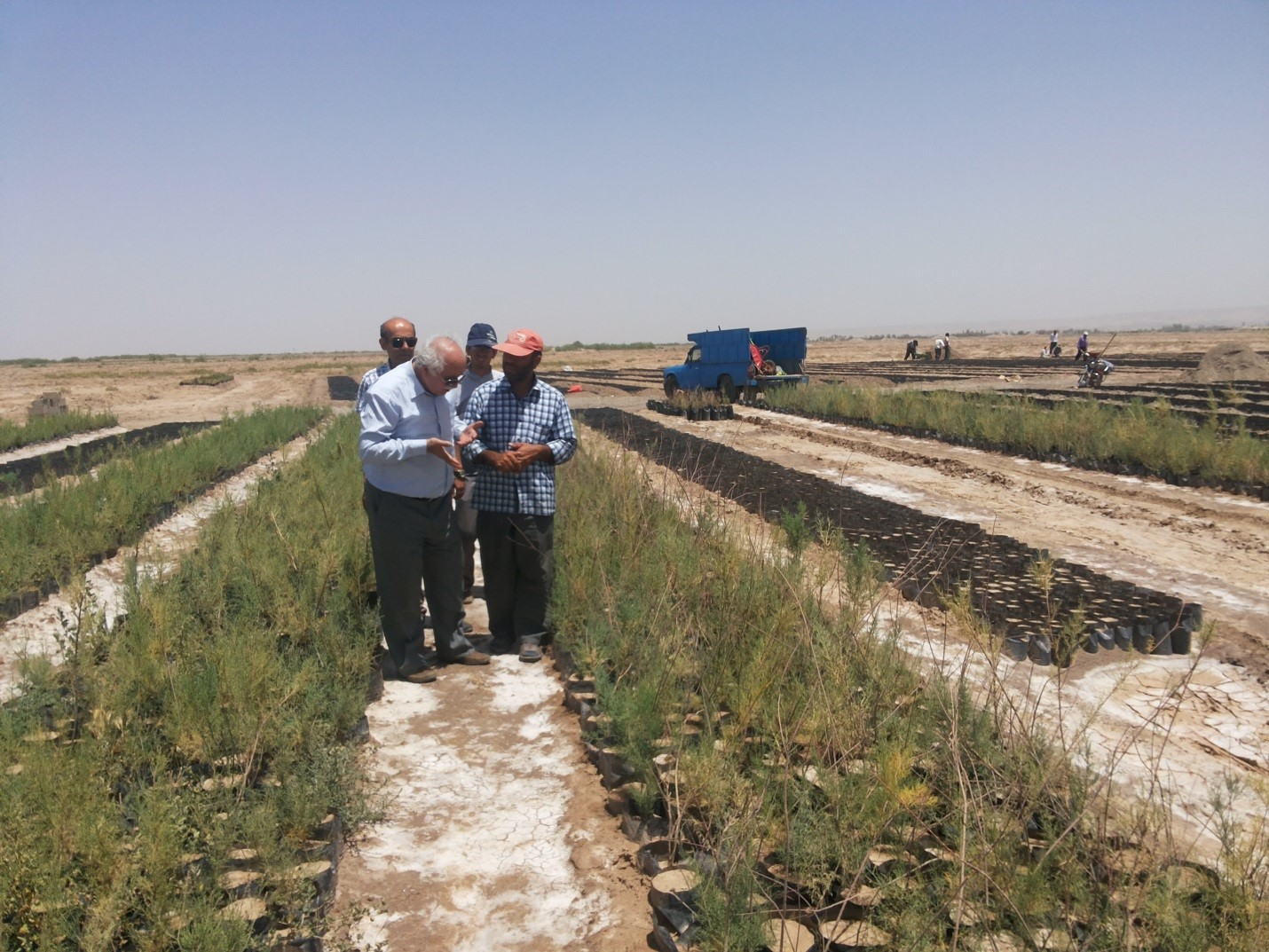 Rehabilitation Plan to Confront against wind and dust erosion of Urmia Lake